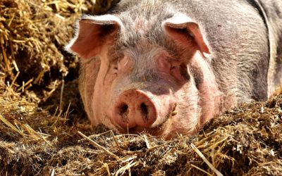 Wir setzen auf die heimische Landwirtschaft – woher unser Fleisch kommt